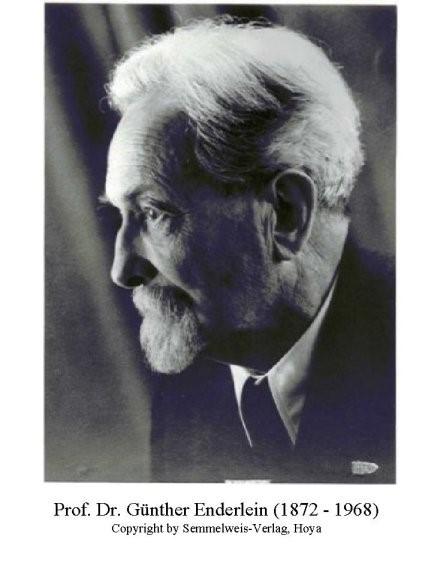 professor dr. G. Enderlein