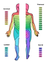 temperatuurverschillen van de huid informeren over orgaan functie